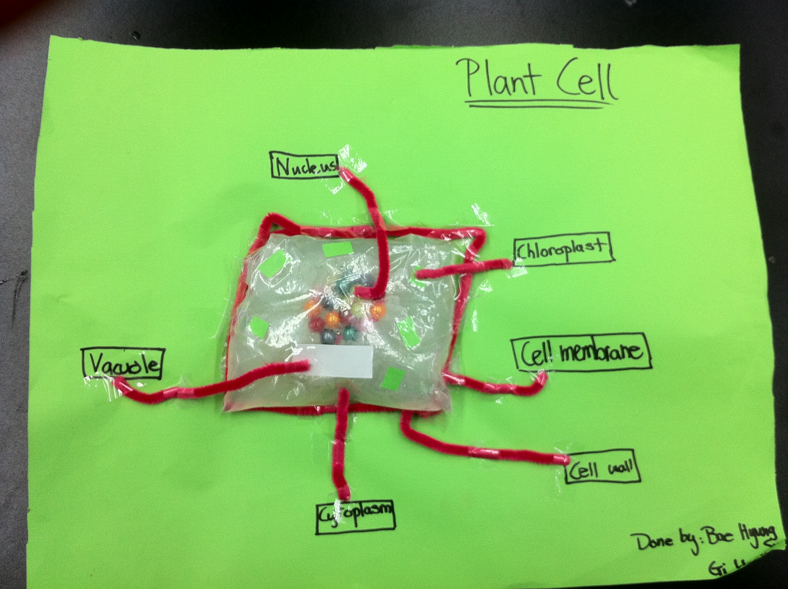 Mr gaynors class s1p animal plant and specialised cell models plant cell pooptronica Images
