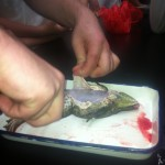 frog dissection 005