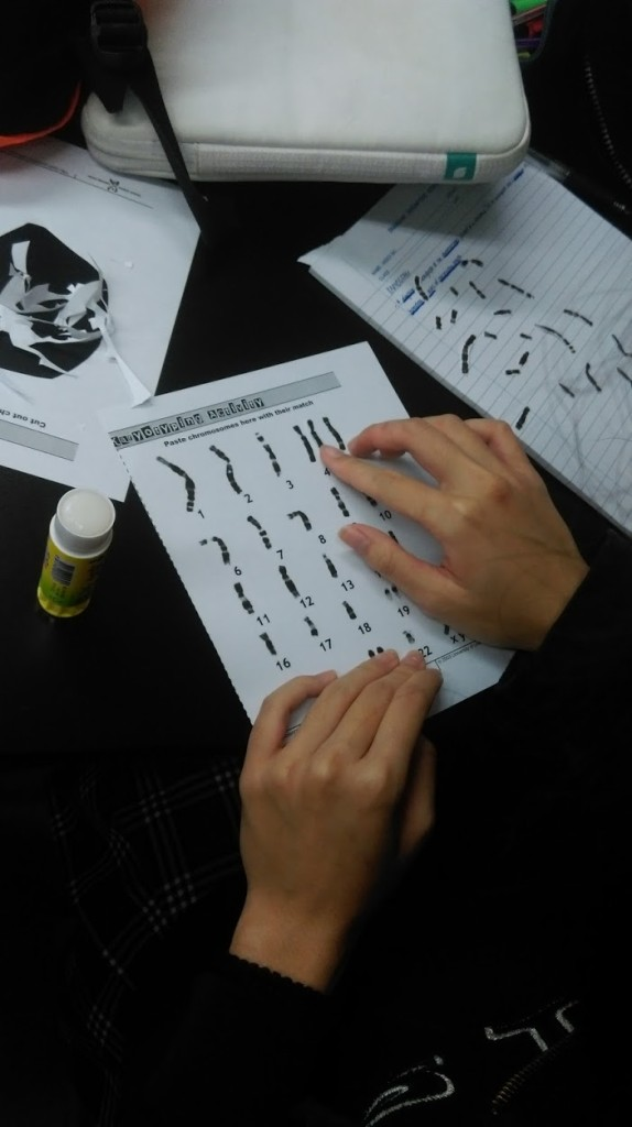 karyotype photo