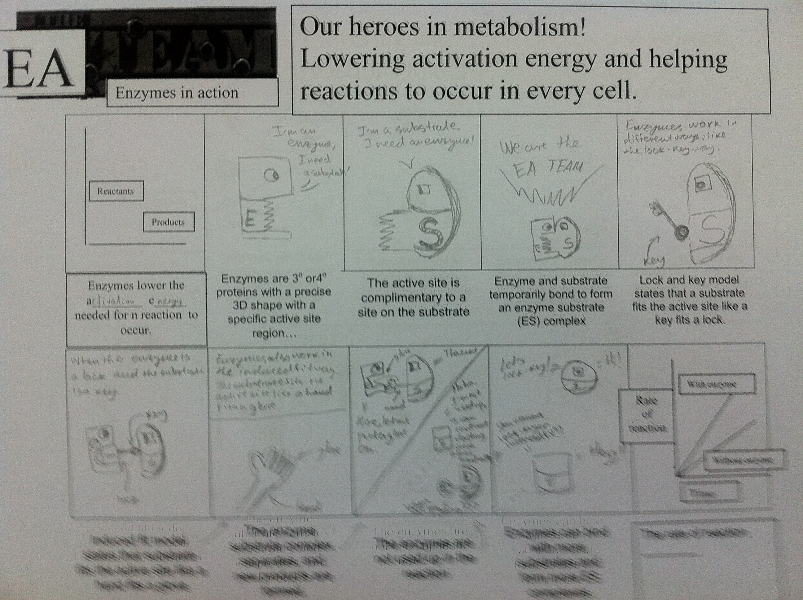 Enzyme Comic Strip