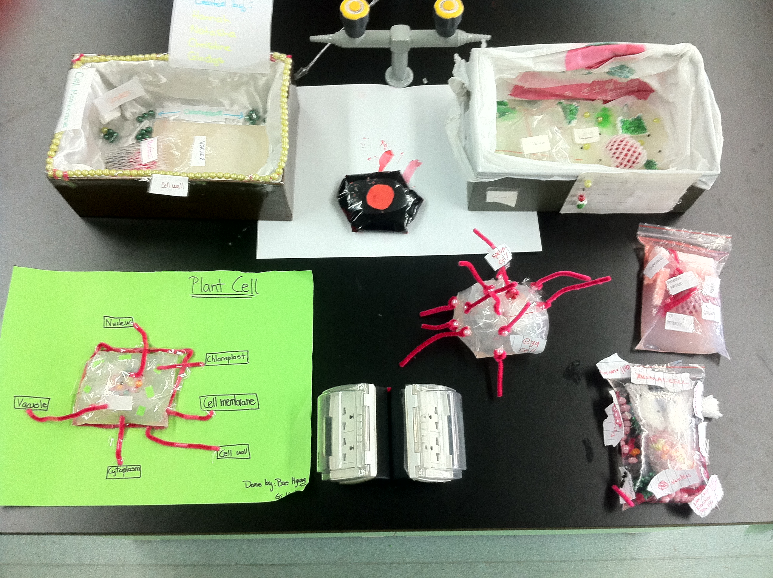 Mr Gaynors Class Cells 3d Animal Cell Diagram Success Grade 8 Plant S1 Pearls Amazing Models